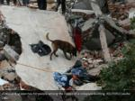 a rescue dog searches for people among the rubble