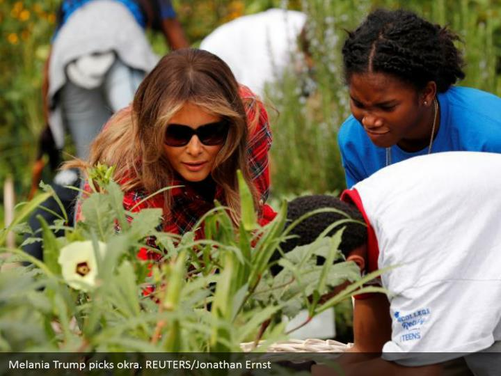 Melania Trump picks okra. REUTERS/Jonathan Ernst