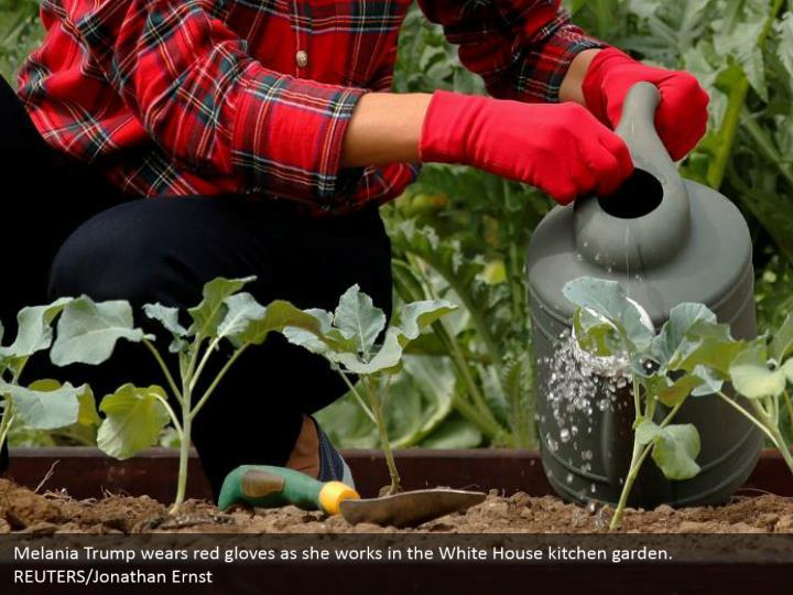 Melania Trump wears red gloves as she works in the White House kitchen garden. REUTERS/Jonathan Ernst
