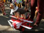 a dog dressed as a pilot reuters lucas jackson