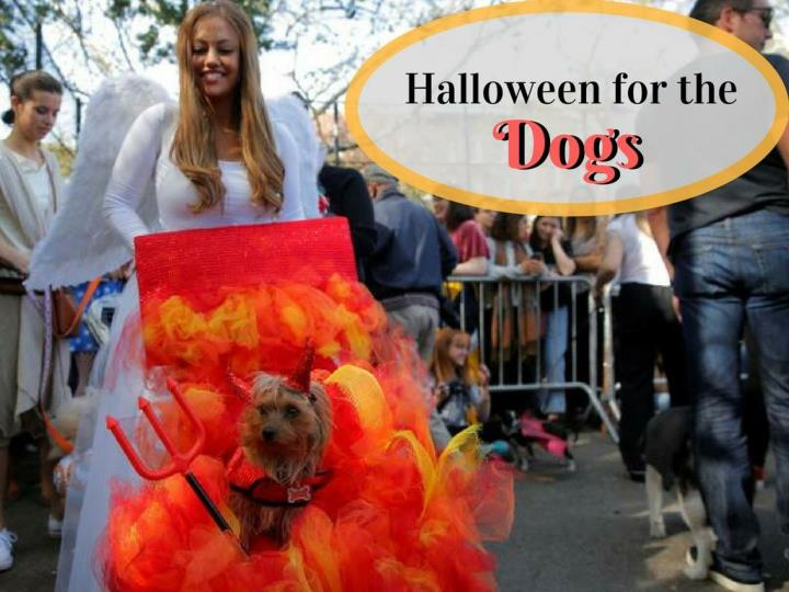 halloween for the dogs n.