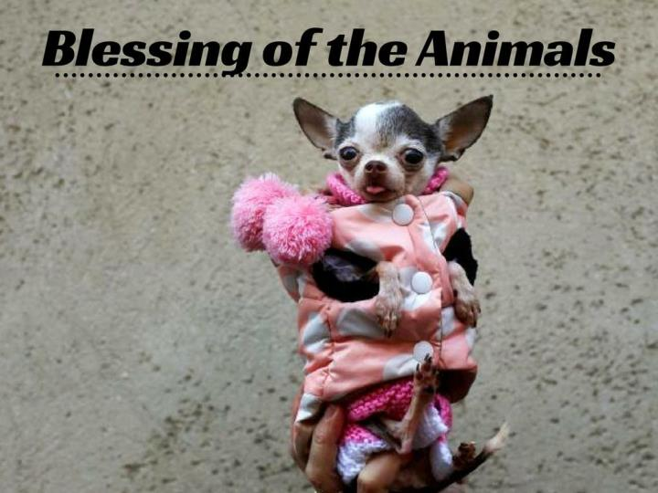 blessing of the animals n.