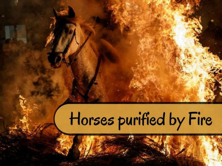horses purified by fire n.