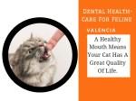 dental health care for feline