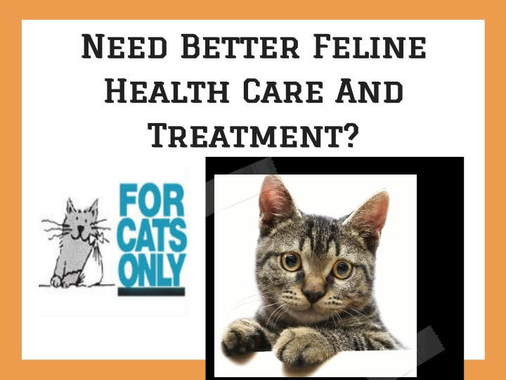 need better feline health care and treatment n.