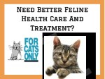 need better feline health care and treatment