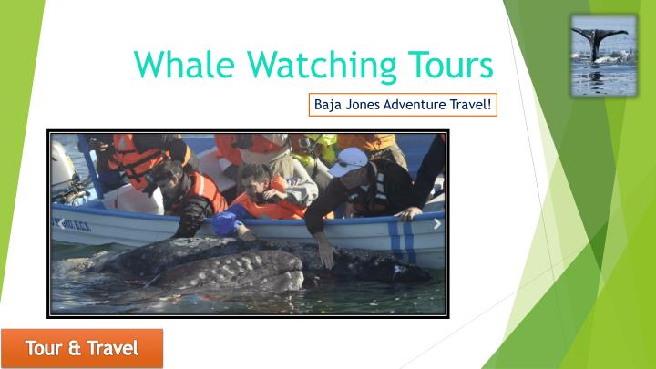 whale watching tours n.