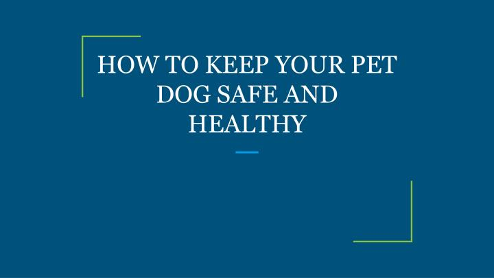 how to keep your pet dog safe and healthy n.
