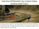 dail now 9599848481 jim corbett online booking safari zones