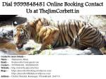 dial 9599848481 online booking contact us at thejimcorbett in