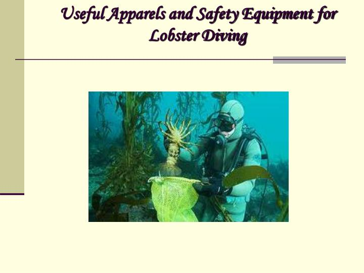 useful apparels and safety equipment for lobster diving n.