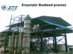 enzymatic biodiesel process