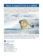 snow leopard trek in ladakh