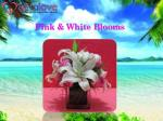 pink white blooms