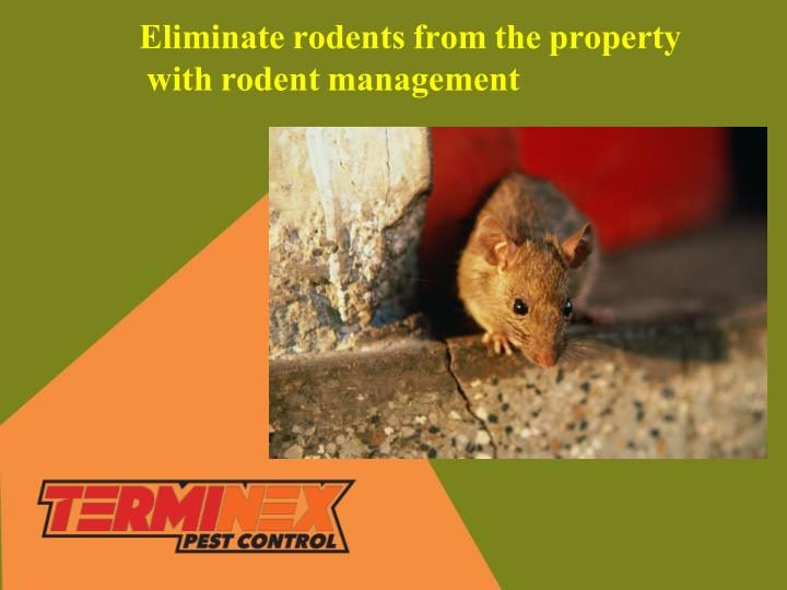 eliminate rodents from the property with rodent n.