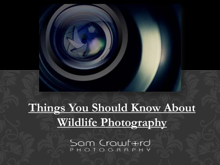 things you should know about wildlife photography n.