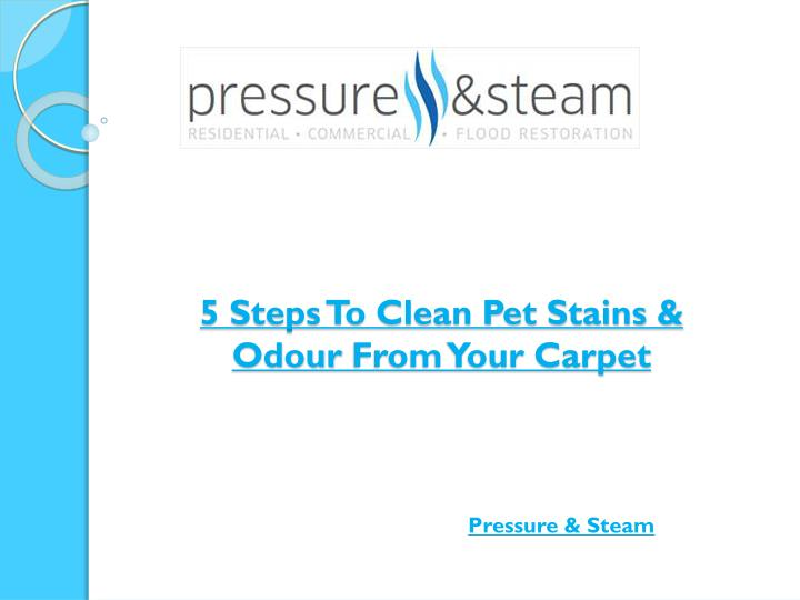 5 steps to clean pet stains odour from your carpet n.
