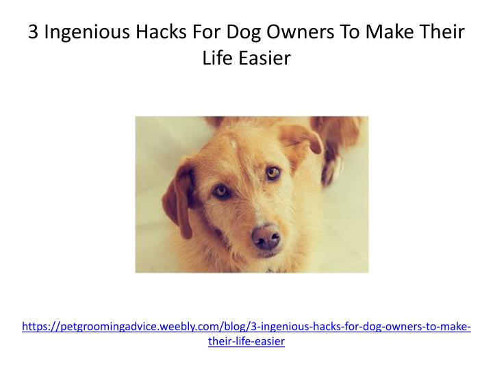 https petgroomingadvice weebly com blog 3 ingenious hacks for dog owners to make their life easier n.