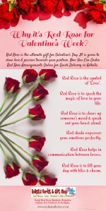 why it s red rose for valentine s week red rose