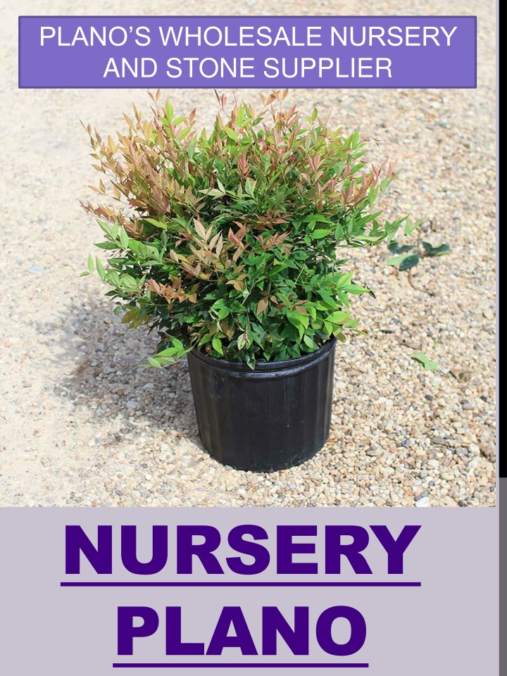 plano s wholesale nursery and stone supplier n.