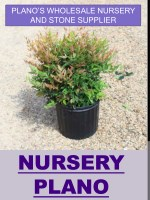 plano s wholesale nursery and stone supplier