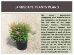 landscape plants plano