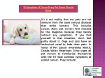 10 symptoms of cancer every pet owner should know 1