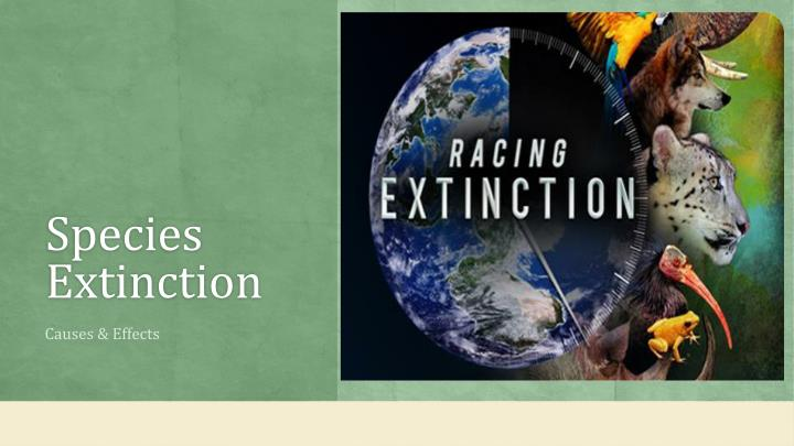species extinction n.