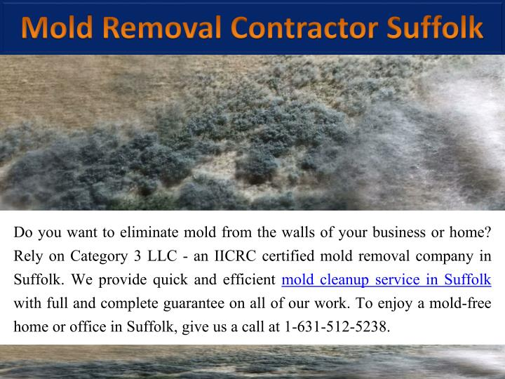 mold removal contractor suffolk n.