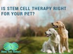 is stem cell therapy right for your pet