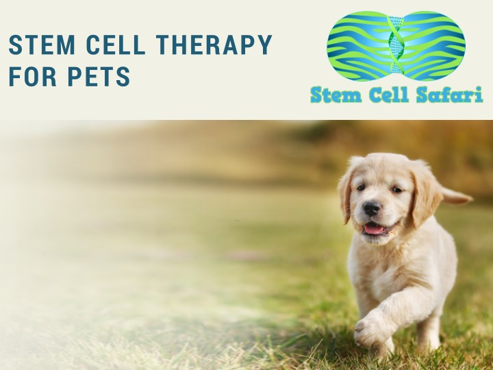 stem cell therapy for pets n.