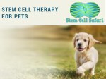 stem cell therapy for pets