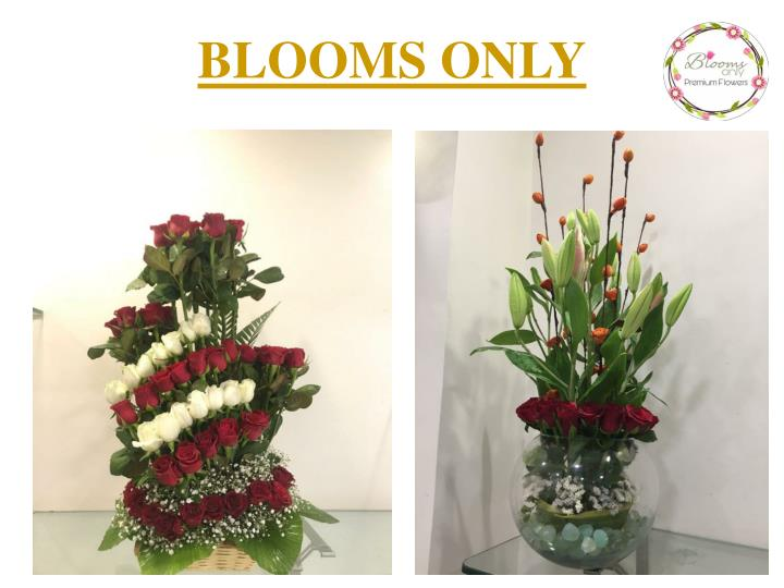 blooms only n.