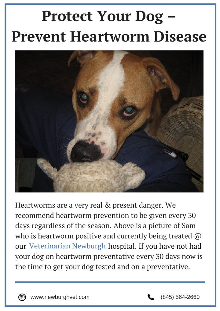 protect your dog prevent heartworm disease n.