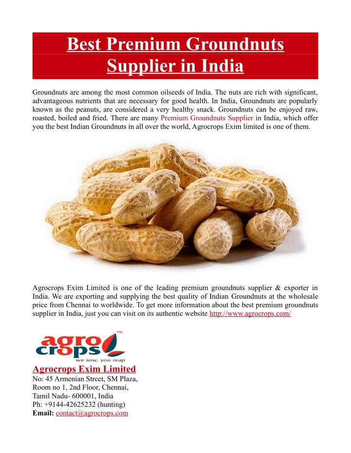 best premium groundnuts supplier in india n.