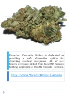 canadian cannabis online is dedicated
