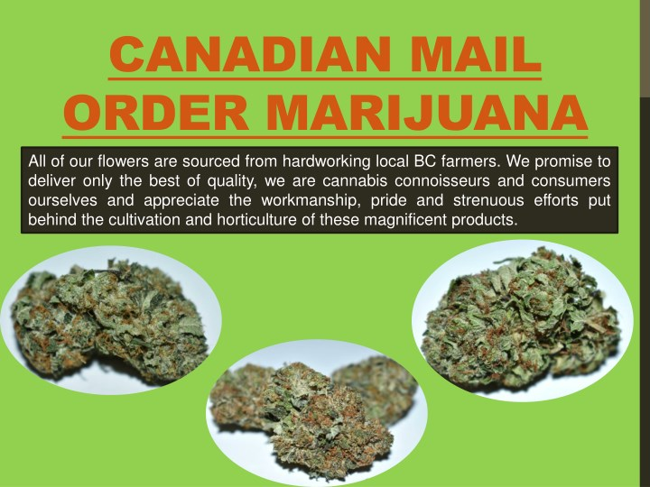 canadian mail order marijuana all of our flowers n.