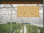 mail order marijuana in canada