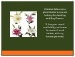 oriental lilies are a great choice