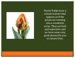 parrot tulips have a certain texture that appears