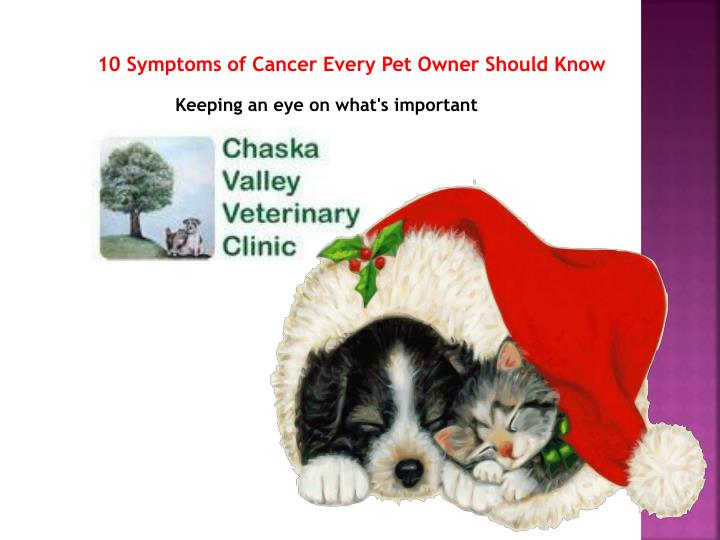 10 symptoms of cancer every pet owner should know n.