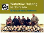 waterfowl hunting in colorado birds and bucks outdoors
