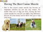 having the best canine muzzle