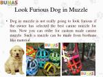 look furious dog in muzzle