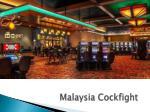 malaysia cockfight