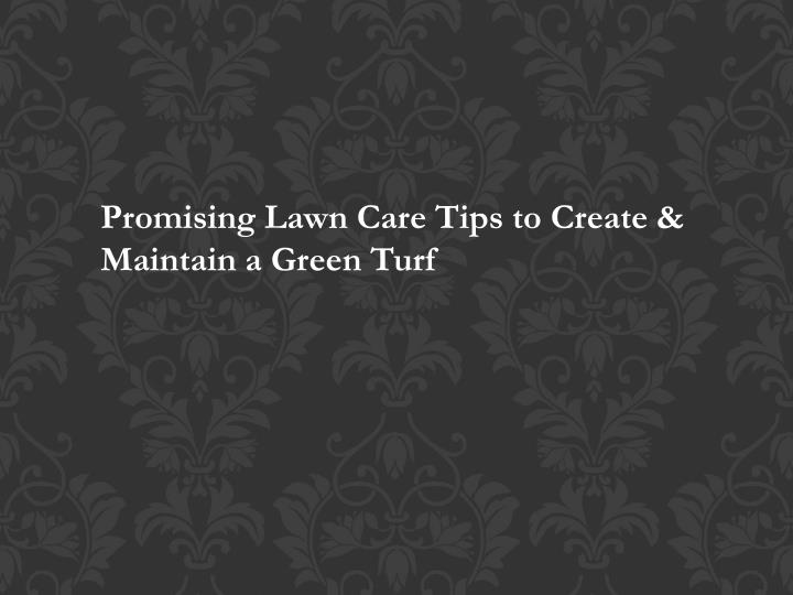 promising lawn care tips to create maintain n.