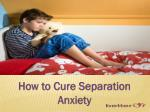 how to cure separation anxiety