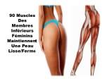 90 muscles des membres inf rieurs f minins