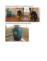 mold inspection and remediation services