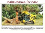 sabal is a genus of new world palms many